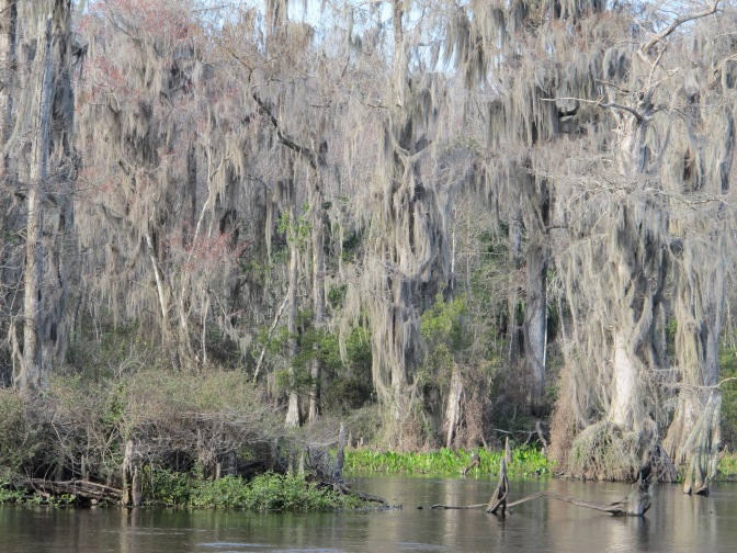 Forget the Everglades…drive to Wakulla Spring State Park!