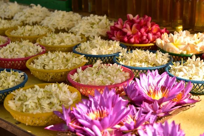 Escape to Sri Lanka, a paradise for the senses.