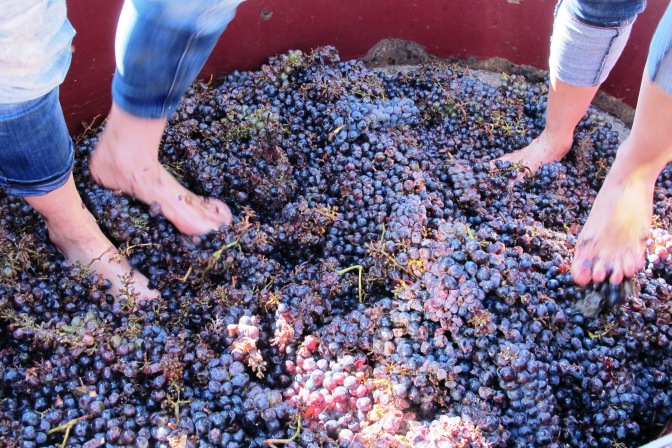 Have you ever tried grape stomping?